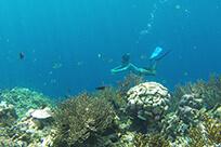 pop-snorkeling.jpg